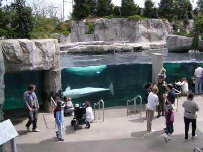Mystic Aquarium, CT Nothing better than being a member Liam loves
