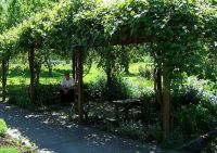 grape vine covered pergola | Yard Crashers | Pinterest
