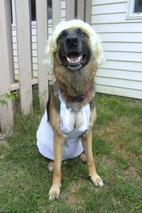 Marilyn Monroe Dog Costume | Dog Costumes | Pinterest
