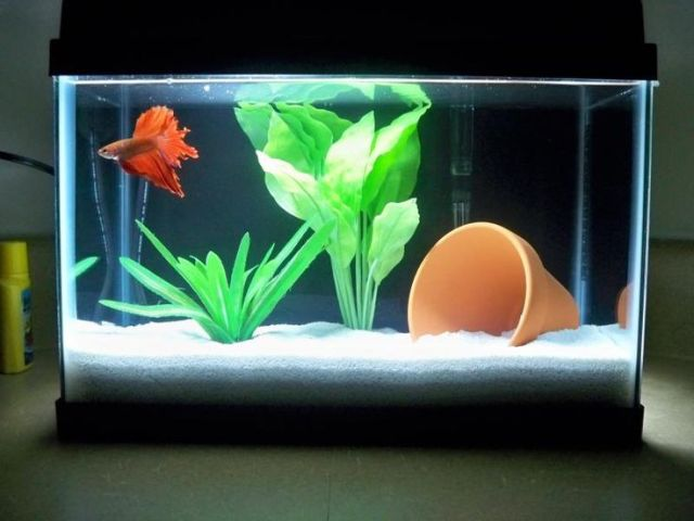 gallon tank with a beautiful betta. This is a small tank, but it