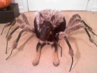 This puppy spider costume freaks me out! From the German ...