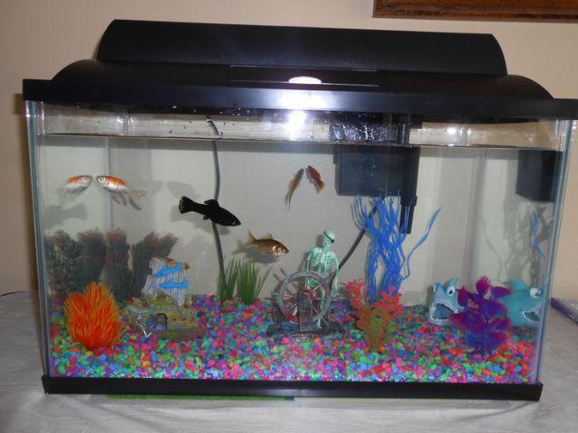 10 Gallon fish tank example. | Fish Tanks to Admire/Ideas | Pinterest