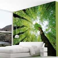 Enchanted Forest Wall Murals