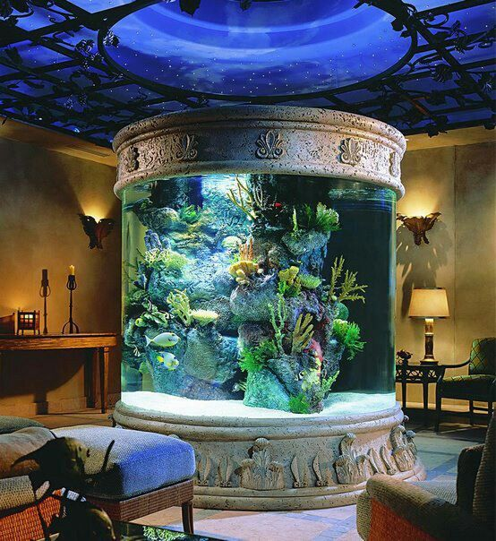 Fish tank in living room | Home Ideas | Pinterest