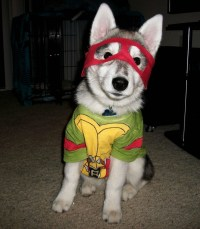 TMNT Dog Costume | Ninja Turtles Costumes & TMNT Cosplay ...