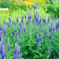20 Best Perennials for Your Garden