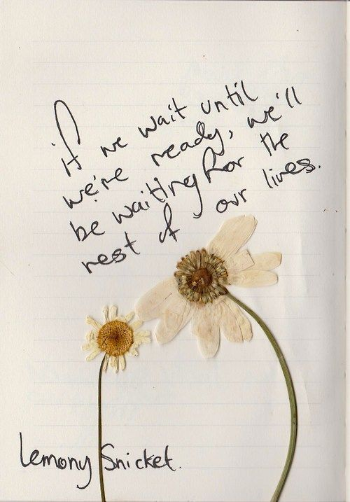 Milk And Honey Quote Wallpapers Daisy Flower Quotes Quotesgram