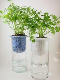 Self watering planter | Gardening | Pinterest