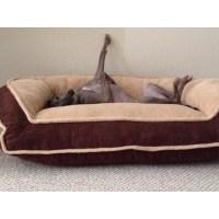 Dog, dog bed, couch, Italian Greyhound | iggy | Pinterest