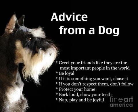 Dog unconditional love quotes on facebook quotesgram