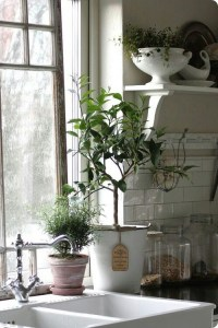 Kitchen plants   Home decor ideas   Pinterest