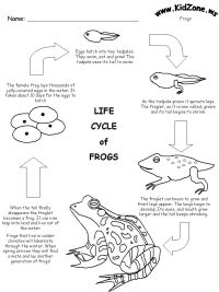 Life Cycle Worksheet | PlantsUnit | Pinterest