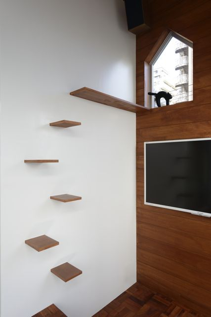 Cat Stairs Architecture Inside Pinterest