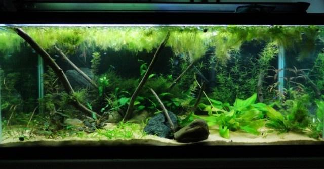 75 Gallon Aquarium Ideas 75 Gallon Tanganyikan Cichlid Aquarium Fish Tank Trustefish Fish
