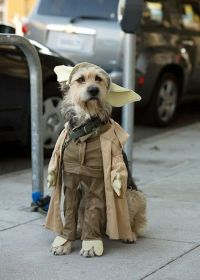 Yoda Dog Costume -- a new variation! | Halloween for dogs ...