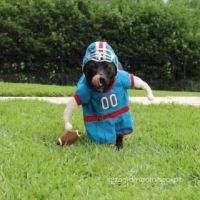 I got my dog a football player costume