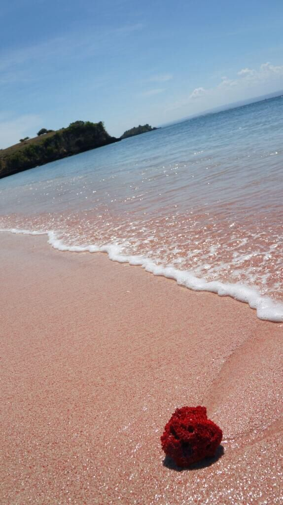 Bf Indonesia Kumpulan Film Biru Blue Film Bf Dari Jombang Indonesia Pink Beach Lombok Beautiful Indonesia Pinterest