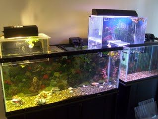 Pin by MaurO on Aquarium et Terrarium   Acuarios y Terrarios | Pinter