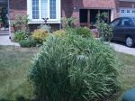 Plants To Hide Utility Boxes In Yard