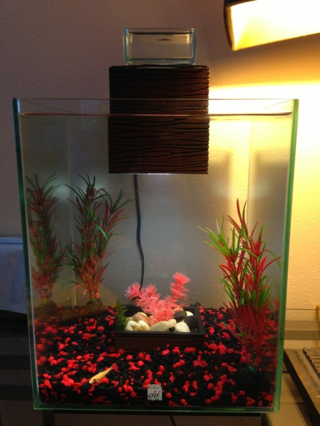 5 gallon fish tank terrarium 30 gallon square glass for Square fish tank