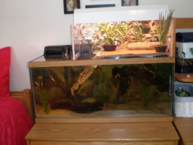 Great idea to try for out turtle . swimming AND basking zones!