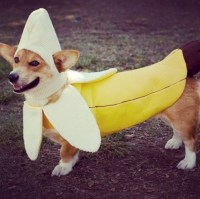Banana dog costume funny and cute