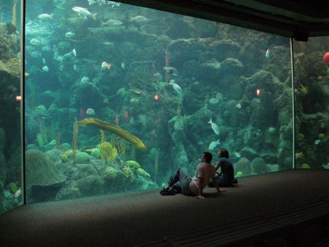 Florida Aquarium, Tampa | Sunshine State | Pinterest