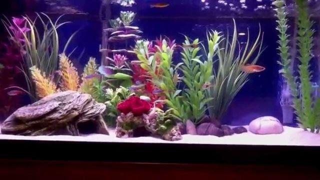 Freshwater fish 2 5 gallon tank betta aquarium joy for Aquarium decoration ideas freshwater