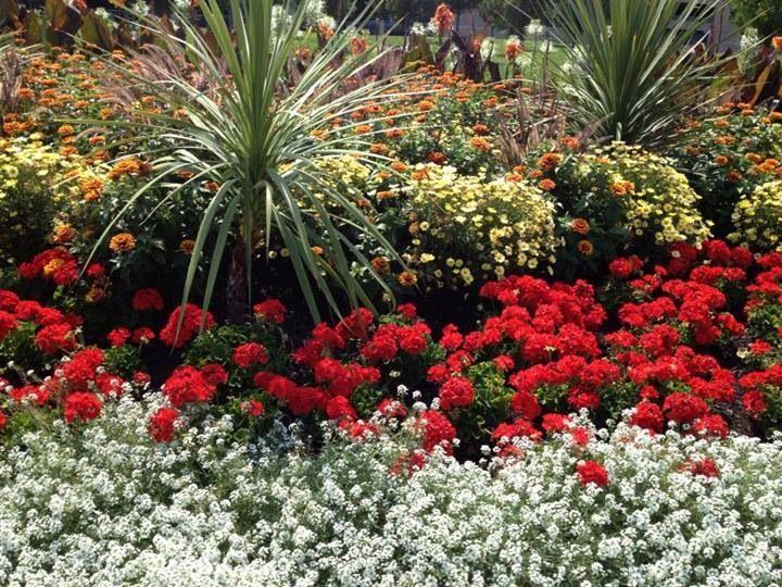 Magnificent flower garden