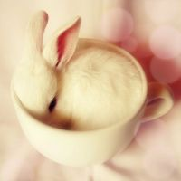 bunny in a teacup | For my knucklehead sister Joyce! LOL ...