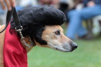 Dog Costume Elvis