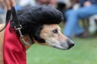 Dog Costume Elvis | Dog Costume | Pinterest