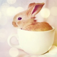 Teacup Bunny | inspiration | Pinterest