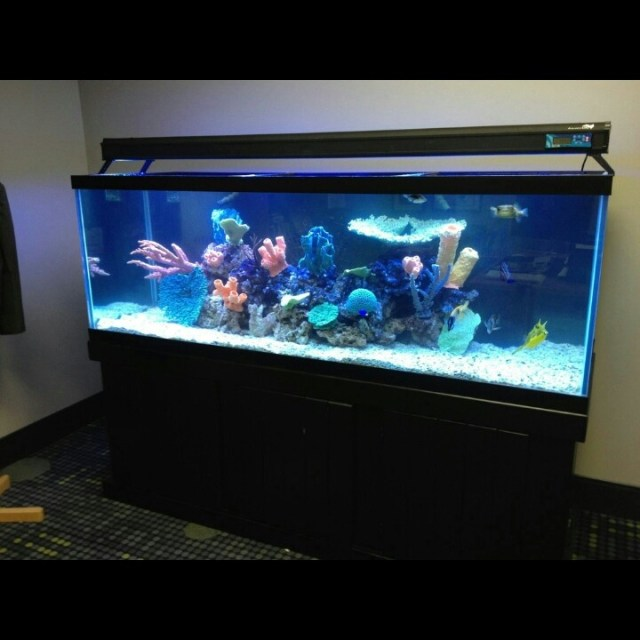 200  gallon fish only system