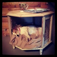 Antique end table turned into dog bed  | Crafts | Pinterest