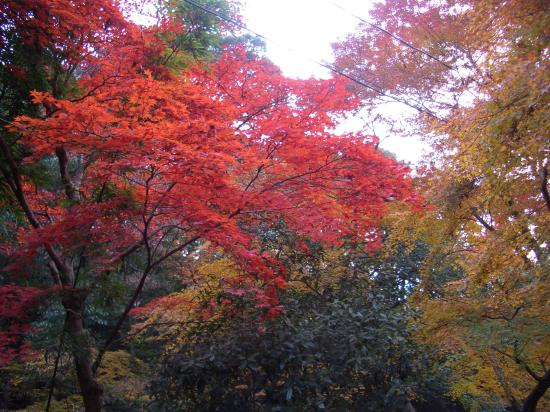 Japan Fall Colors Wallpaper Fall Colors In Japan Picture Of Osaka Osaka Prefecture