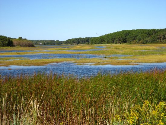 This is an amazing wildlife sanctuary! - Review of Wellfleet Bay