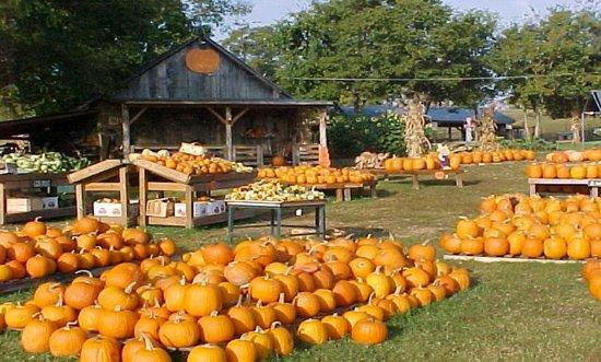 Fall Wallpaper Backgrounds Pumpkins Walden Pumpkin Farm Smyrna Tn Top Tips Before You Go