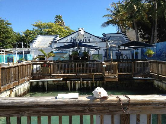 Aquarium   Picture of Key West, Florida Keys   TripAdvisor