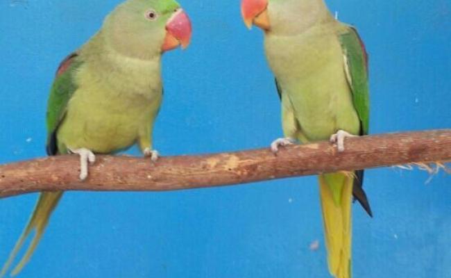 Dubai Zoo 2018 All You Need To Know Before You Go With Photos Tripadvisor
