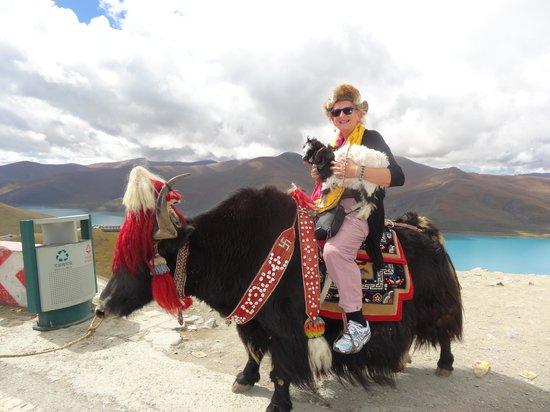 Julia Yak Ride In Tibet Picture Of Encounters Nepal