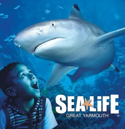 Get up close and personal to our wonderful black tip reef sharks. - Picture of Sea Life Centre ...