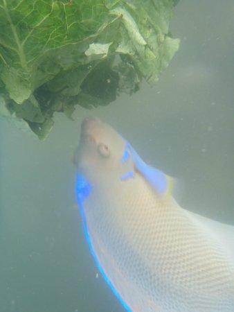 Salt Water Fish in Utah   Picture of Bonneville Seabase, Grantsville