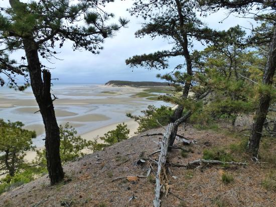 View from the top - Picture of Great Island Trail, Wellfleet