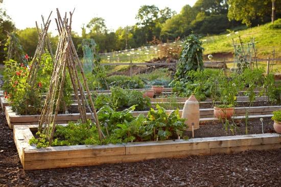 Tudor Farmhouse Kitchen Garden Picture Of Tudor