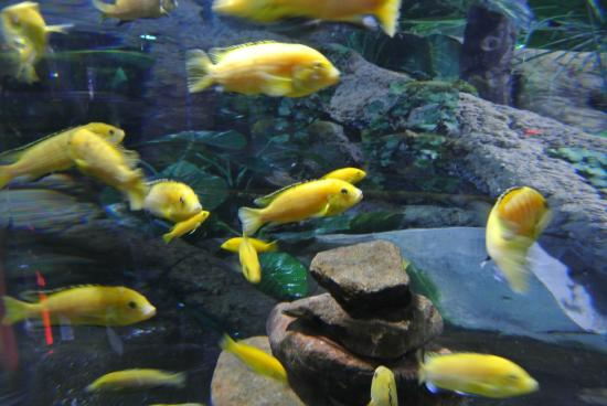 near me   Foto di Dubai Aquarium & Underwater Zoo, Dubai   TripAdvisor