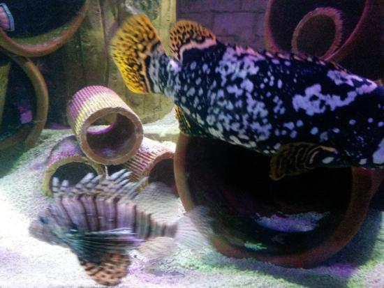 fish tank 6   Picture of Sea Life Brighton, Brighton   TripAdvisor