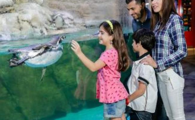 Dubai Aquarium Underwater Zoo 2018 All You Need To Know Before You Go With Photos