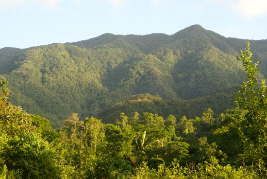The view from outside the cabins - Picture of Toucan Ridge Ecology