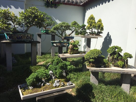 Beautiful garden and friendly people - Picture of Chinese Garden - chinese garden design